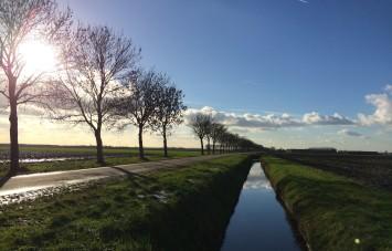 laan, polder, boom