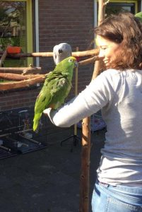papegaai, cursus, groene draak, kennismaking