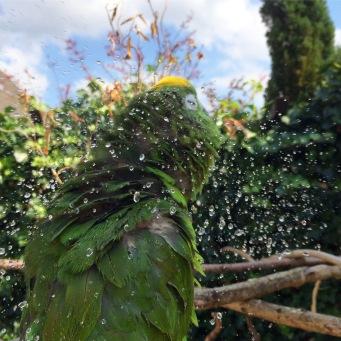 Foto Hamar maakt foto van doucende papegaai, die spetters maakt