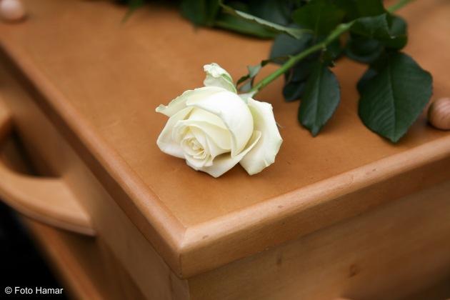 Roos op grafkist op een begraafplaats