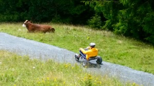 Mountaincart en koe op de weg