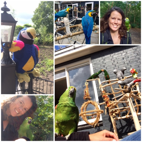 Papegaaien tijdens een wandeling bij My Own Little Zoo