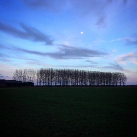 Paardenstal met bosstrook en volle maan