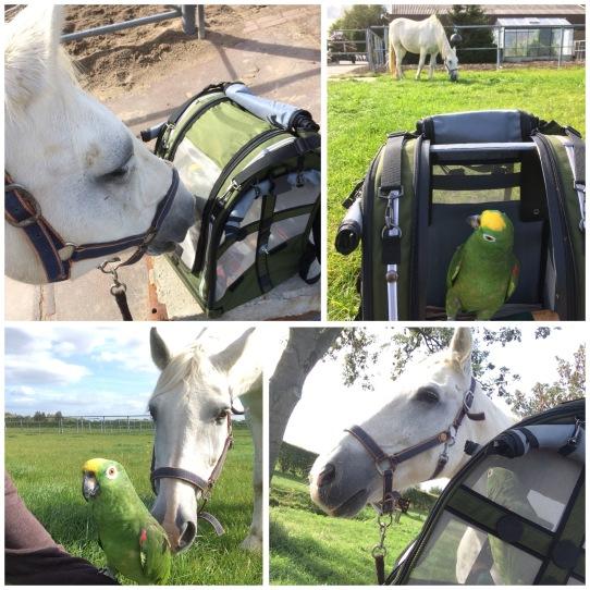 Paard en papegaai samen aan de wandel.