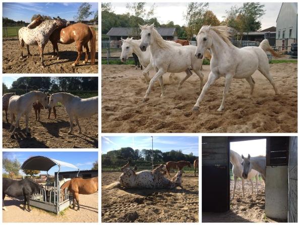 Rollend paard, rennend paard en een etend paard