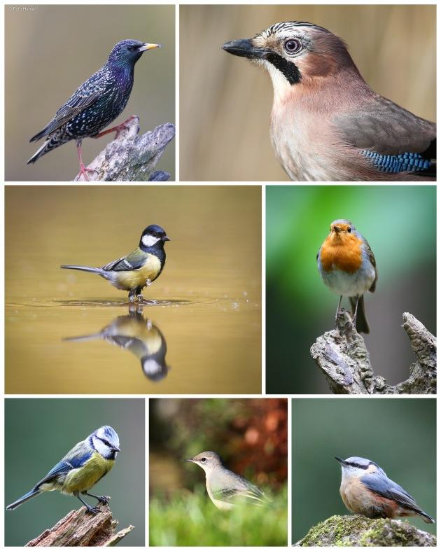 Diverse bos en tuinvogels